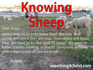 Knowing Sheep