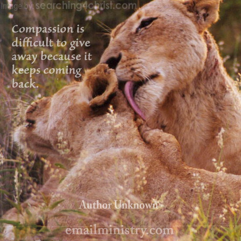 compassion-to-give