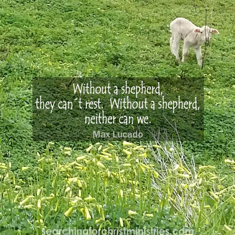 Without A Shepherd