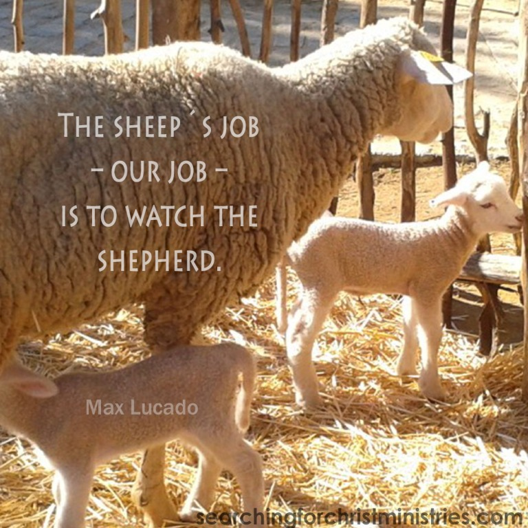 The Sheep´s Job