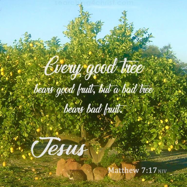 Matthew 7:17