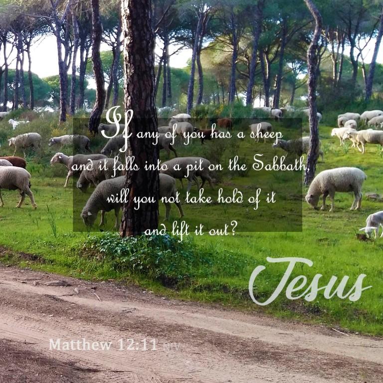 Matthew 12:11