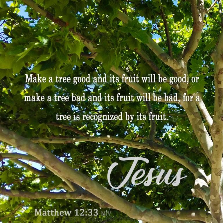 Matthew 12:33